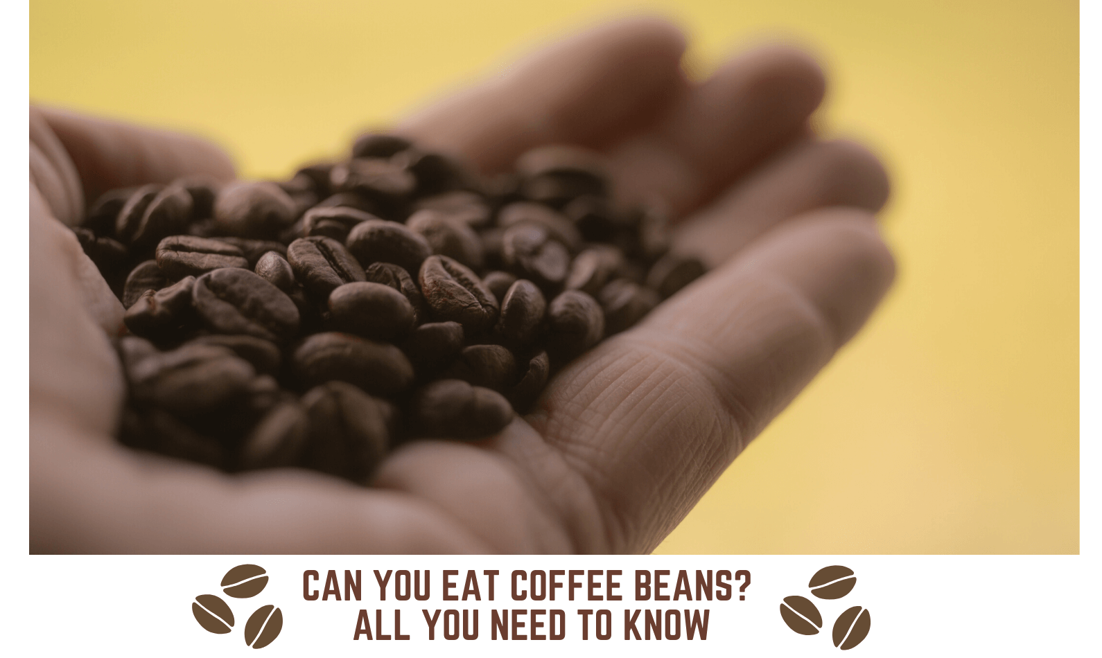 Can You Eat Coffee Beans